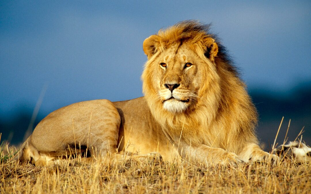 Carnival of the Animals: The Lion